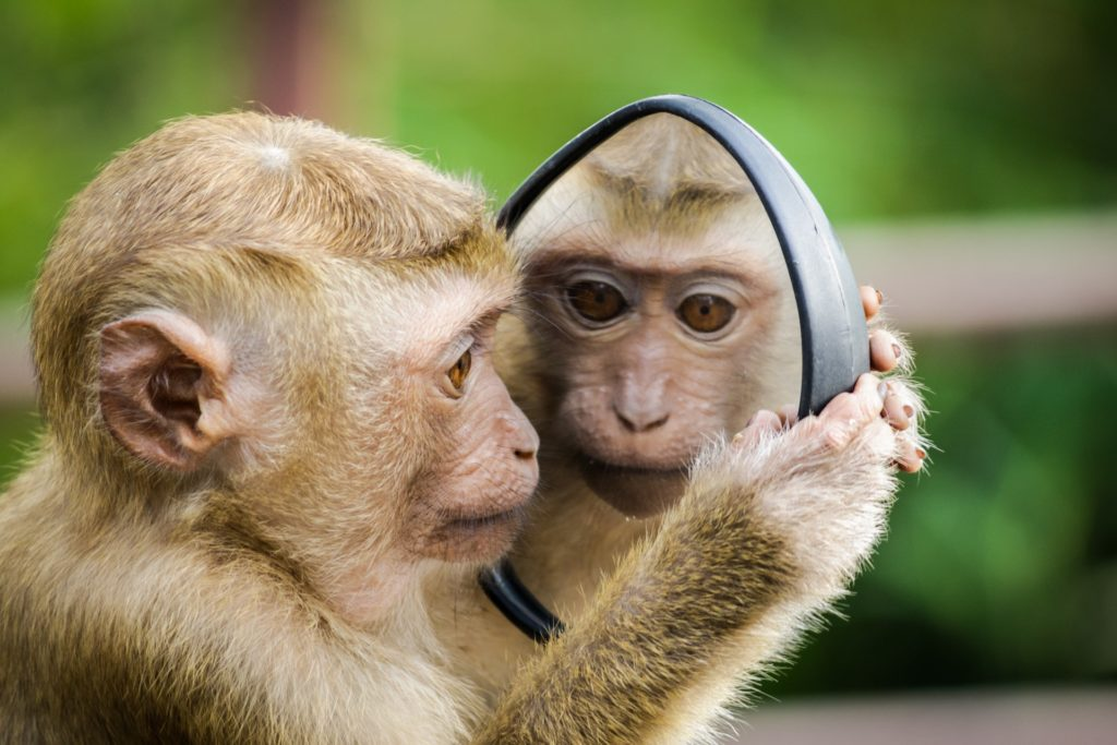 Monkey seeing the mirror.